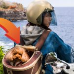 愛犬とツーリング! これってアリ? それとも違反? ペットをバイクに乗せる方法 - ペットを乗せる-3